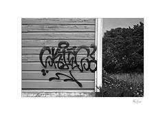 Art (radspix) Tags: yashica 230af af 3570mm f3345 macro ilford fp4 plus pmk pyro