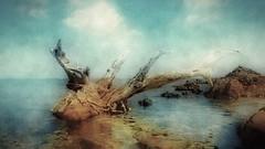 Driftwood (endresárvári) Tags: driftwood sea landscape sardinia rocks cloud water nature acdsee canon