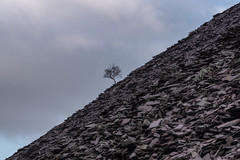 Llanberis Lone Tree... (g3az66) Tags: llanberislonetree lonetree llanberis dinorwic snowdonianationalpark slate quarry spoil tip tree