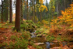 colours of the autumn (JoannaRB2009) Tags: sudety autumn fall forest stream tree trees woods colours yellow golden water polska poland lowersilesia dolnyśląsk