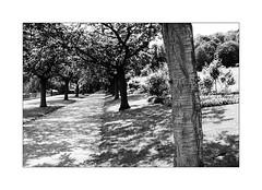 Il a suffi que tu apparaisses. (Scubaba) Tags: europe france pasdecalais noirblanc noiretblanc blackwhite bw monochrome arbres trees ombres shadows
