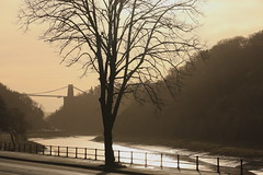 Into The Light (acwills2014) Tags: riveravon bristol clifton suspension bridge silhouette tree river sunlight atmosphere mood light tide portway fence railings