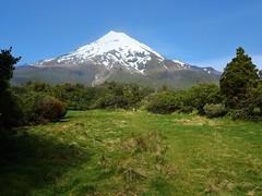 Taranaki. Mount Taranaki a pefect volcanic cone. In October in the spring. (denisbin) Tags: taranaki mountegmont mounttaranaki maori youth man maoriman