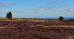 Purple Carpet (RoystonVasey) Tags: canon eos m 1855mm stm zoom north yorkshire dales ydnp coverdale sunshine
