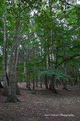 Forest in Poland (Anna Calvert Photography) Tags: poland polska beach europe people landscape nature forest trees summer outdoors