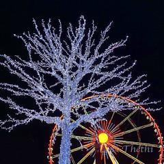 181209 arNB 190102 © Théthi (thethi: pls read my first comment, tks) Tags: hiver nuit arbre roue lumière noel bruxelles brussels belgique belgium c4 carre setdecembre faves40 faves46 faves50 bestof2018