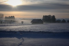 Cold Winter Morning (qaxwkhlm1) Tags: nebel fog canon sunrise sky frozen morning cold