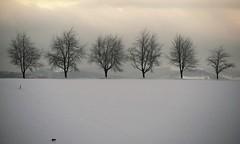 Alone on Earth (blogspfastatt (+5.000.000 views)) Tags: blogspfastatt winter season hiver cat chat kot hiking gato gatto katze