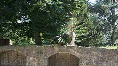 2013-08-16_16-48-41_NEX-6_DSC09766 (Miguel Discart (Photos Vrac)) Tags: 100mm 2013 belgie belgique belgium botanicalgarden brugelette e18200mmf3563 focallength100mm focallengthin35mmformat100mm iso200 jardinbontanique nex6 pairidaiza paradisio sony sonynex6 sonynex6e18200mmf3563 zoo