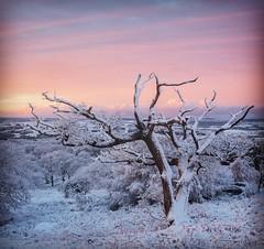 Winter in Bonnie Galloway. (Mark McKie Photography) Tags: galloway gallowayforestpark southwestscotland southofscotland dumfriesgalloway scotland minnigaff newtonstewart nikond7500 nikon snow tree knockman winterlandscape winterscene sunrise
