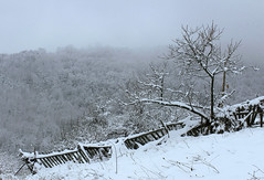 Winter fence (Creativespirit13) Tags: winter snow blackandwhite snowlandscape trees balkan mountains bulgaria staraplanina balkanmountains