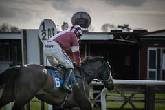 DSC_0785 (fullerton42) Tags: straftford racecourse stratfordracecourse horse horses racehorse horseracing race punter punters specatators sport equine england