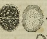 This image is taken from Page 274 of The microscope: and its revelations (Medical Heritage Library, Inc.) Tags: microscopy natural history wellcomelibrary ukmhl medicalheritagelibrary europeanlibraries date1856 idb28136974