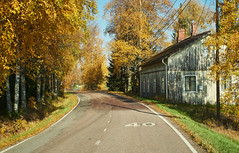 Sunny road and a house. Fall colors in the autumn in Finland. (Digikuvaaja) Tags: fallcolors autumncolors road autumn fall orange red landscapescenic season finland nordiccountries europe idyllic northern nature colorful background outdoor natural yellow park leaf travel forest beautiful environment leaves trees day color asphalt foliage sunlight golden light bright trip freedom speed rural line highway freeway drive scene adventure route building house