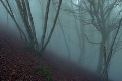 remembering the fog