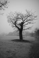 L1004860 (Sonsoles Huidobro) Tags: leicam10 elmarit24 fog nieblas landscape