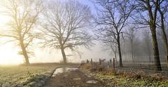 Lumière dorée.. (Evim@ge) Tags: brume soleil « lever de » sunrise mist misty brumeux chemin track sentier hiver glacé icy light lumière lumineux lithty arbres trees grésivaudan