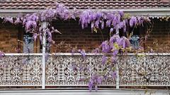 Balkon mit Blumen in Sydney (Sanseira) Tags: australien australia sydney 2002 balkon blumen