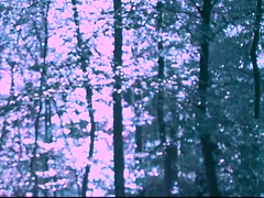 045bv (Lia's Mind) Tags: video surreal nature softfocus trees