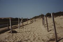 Le long du Courant d'Huchet (Sébastien Combet) Tags: molietsetmaa canon canonet fujichrome sensia reversal inversible diapositive summer plage beach landes courantdhuchet