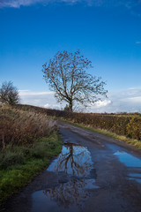 Down the lane (alanrharris53) Tags: liverton north yorkshire lane tree reflection puddle pool
