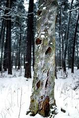 Old (Eklandet) Tags: árbol albero arbre baum cold frost frozen ice nordic river samsung scandinavia snow sweden träd tree uppsala winter kronparken nature naturephotography