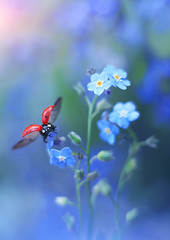 Forget-me-not (ElenAndreeva) Tags: nature flower flora summer blur garden wild petal color fly ledybug colorful blue dream soft focus canon amazing cute sweet top beautiful popular tags insect macro sun light beauty best bug 2018 likes andreeva