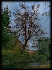 """ OUTONO GALEGO"" §aⓕⓕ §unset  Ph[⭕]tography  #PHOTOMOVIL #photography #nature #paisajes #landscape #colors #ngc #NATURALEZA #huawei #leaves #expressión #autumn #imagination #flowers #flores #colores #natural #bayón #saffsunset #day #sun #noviembre #vila (saffsunset) Tags: riadearousa blue colores ngc sun colors galicia leaves paisajes day noviembre flowers flores natural nature saffsunset bayón imagination green pontevedra photomovil expressión vilagarciadearousa red huawei galifornia naturaleza autumn photography landscape"