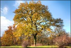 Auprès de mon Arbre .....en pays Lotois (lo46) Tags: france occitanie midipyrénées lot departementdulot arbre chêne végétal nature automne couleur canon60d lo46