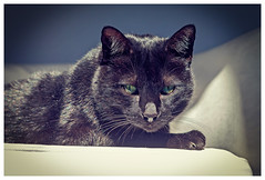 Pepe (Pepenera) Tags: cat cats gatto gato gatti black blackbeauty blackcat portrait