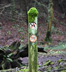 wooden post (Steven Tyrer) Tags: woodenposts forestfarm cardiff woodland walk green