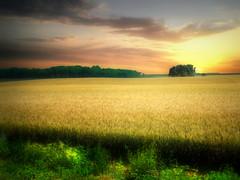 The field 18 (mrbillt6) Tags: landscape rural prairie field farmland trees grass sky grain scenic photoart outdoors country countryside northdakota
