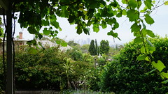 Sydney view from a Greenwich patio (spelio) Tags: dec 2018 sydney trips lj tm