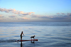 Sunday Paddle (Beth Reynolds) Tags: winter dog paddle bay ocean paddleboard stpetersburg northshore park best friends zen blue sunset dusk