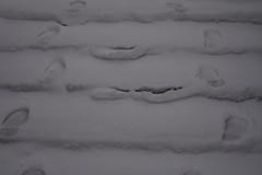 Lumises Rakveres (anuwintschalek) Tags: nikond7200 18140vr eesti estland estonia rakvere lumi schnee snow snowfall tuisk schneetreiben schneesturm schneefall trepp treppe stairs rakvereteater january 2019 jäljed