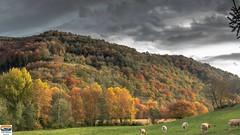Barcus (64) (https://pays-basque-et-bearn.pagexl.com/) Tags: 64 aquitaine barcus colinebuch france lasoule pyrénées montagne paysbasque paysage pointdevue pyrénéesatlantiques village pâturage vaches ciel nuages