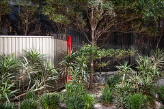 melbourne-1215-ps-w (pw-pix) Tags: garden plants shrubs trees wall vents vented grille slots louvres pressedmetal panels fence corrugated metal aluminium shiny polished reflective silvery silver pole post red orange bright dappled light sun sunny warm spring sand dirt gardenbed paving divider corner courtyard outsidecpaaustralia freshwaterplace southbank melbourne victoria australia peterwilliams pwpix wwwpwpixstudio pwpixstudio