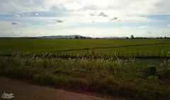 Bucólico (alordelo) Tags: viagens travel bahia arvore clouds brasil brazil céu ilovenature paisagens cores color verde azul blue estrada green sky nature horizonte contraluz natureza nuvens tree trilhas visual rodoviabr101 pénaestrada sony horizon alordelo lordelo