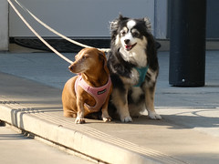 More Waiting (lmurphy) Tags: mountainview animal animals dog dogs nature potd