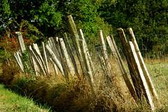 Une clôture bien solide... ??? (jegauberti) Tags: clôture piquets grillage enclos