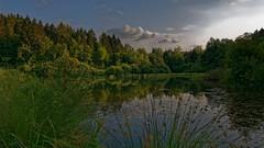 Champs de bataille - Juillet 18 - 004 (sebwagner837_55) Tags: étang vaux vauxdevantdamloup bataille champs verdun meuse lorraine grandest grand est france