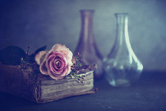 The enchanted rose (Ro Cafe) Tags: bottles nikkor2470mmf28 pinkrose sonya7iii stilllife book textured vintage romantic moody