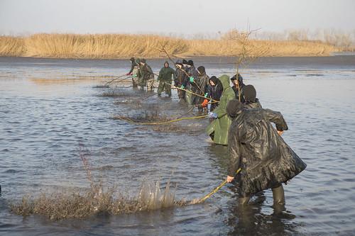 Študenti - rybári Spojenej škole v Ivanke pri Dunaji pri výlove rýb