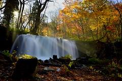 Choshi-otaki (Myajima) Tags: japon japan choshiotaki oirase towada aomori chutedeau waterfall rivière river automne autumn 日本