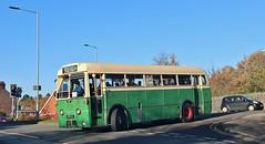 BPV 8, Ipswich Corporation AEC Regal IV, turning into Cobham Road during Ipswich Transport Museum event, 18th. November 2018. (Crewcastrian) Tags: ipswich buses transport ipswichcorporationtransport cobhamroad aecregaliv parkroyal 8 bpv8