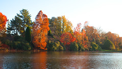 Sheffield Park and Garden.. (Adam Swaine) Tags: lakes sheffieldpark naturelovers nature nationaltrust trees autumn autumncolours autumnviews beautiful seasons sussexgardens sussex canon waterside walks uk ukcounties orange rural 2018