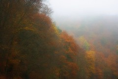 Paysage d'automne dans le brouillard -1- (mamietherese1) Tags: world100f earthmarvels50earthfaves theunforgettablepictures fantasticnature