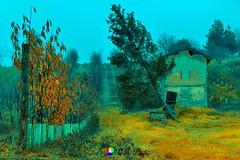 L'autunno è un andante grazioso e malinconico che prepara mirabilmente il solenne adagio dell'inverno (Gianni Armano) Tags: l'autunno è un andante grazioso e malinconico che prepara mirabilmente il solenne adagio dell'inverno bedolla tortona alessandria colli tortonesi piemonte italia italy foto gianni armano photo flickr