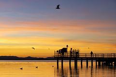 Christmas Sunset (Cristiano Pelagracci) Tags: christmas sunset trasimeno lake lago umbria italia nature orange bird