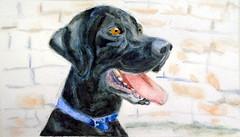 Dog, by Ivette K.M. - DSC02065-002 (Dona Minúcia) Tags: art painting watercolor study paper animal dog cute friend black arte pintura aquarela cãocachorro amigo companheiro preto fofo gracinha